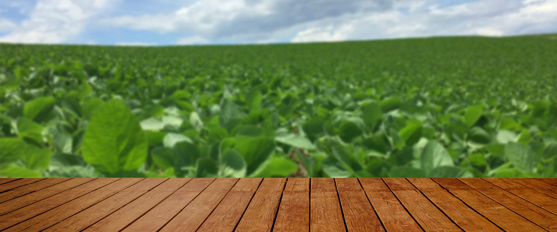 Mineirão Sementes para Pastagem. Ao longo de sua história, a Mineirão Sementes para Pastagem desenvolveu uma sólida expertise na produção de sementes. A segurança de investir em qualidade