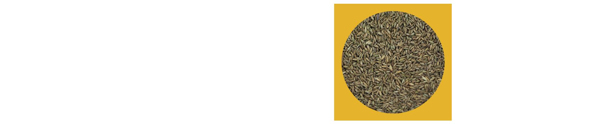A BRS Tamani (Panicum maximum cv. Tamani) é o primeiro panicum híbrido da Embrapa. É uma forrageira de porte baixo, com grande produção de folhas que proporciona boa a cobertura de solo e vigor. Suas principais vantagens são elevada qualidade, facilidade de manejo, baixo porto, produtividade por animal e elevada qualidade no início da seca.