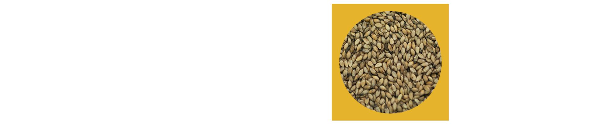 O capim Xaraés, também conhecido como MG-5, capim vitória e toledo, é um cultivar Brachiaria brizantha, de Burundi, na África. Após 15 anos de pesquisa, mais precisamente em 2003, foi coletado pela Embrapa. Tem como suas principais vantagens sua alta produtividade, especialmente de folhas, rápida rebrota e florescimento tardio, o que prolonga o período de pastejo até à seca.
