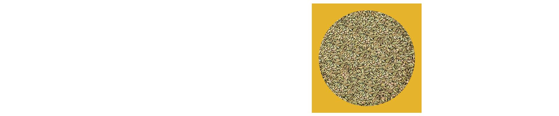 O Panicum maximum cv. Mombaça da Mineirão Sementes é conhecido mundialmente por sua alta produtividade e qualidade, porém, esse capim é exigente em fertilidade do solo. O manejo mais indicado para essa pastagem é o rotacionado; não é indicado para dias fixos com descanso, mas sim o pastejo e descanso de acordo com a altura da forragem.