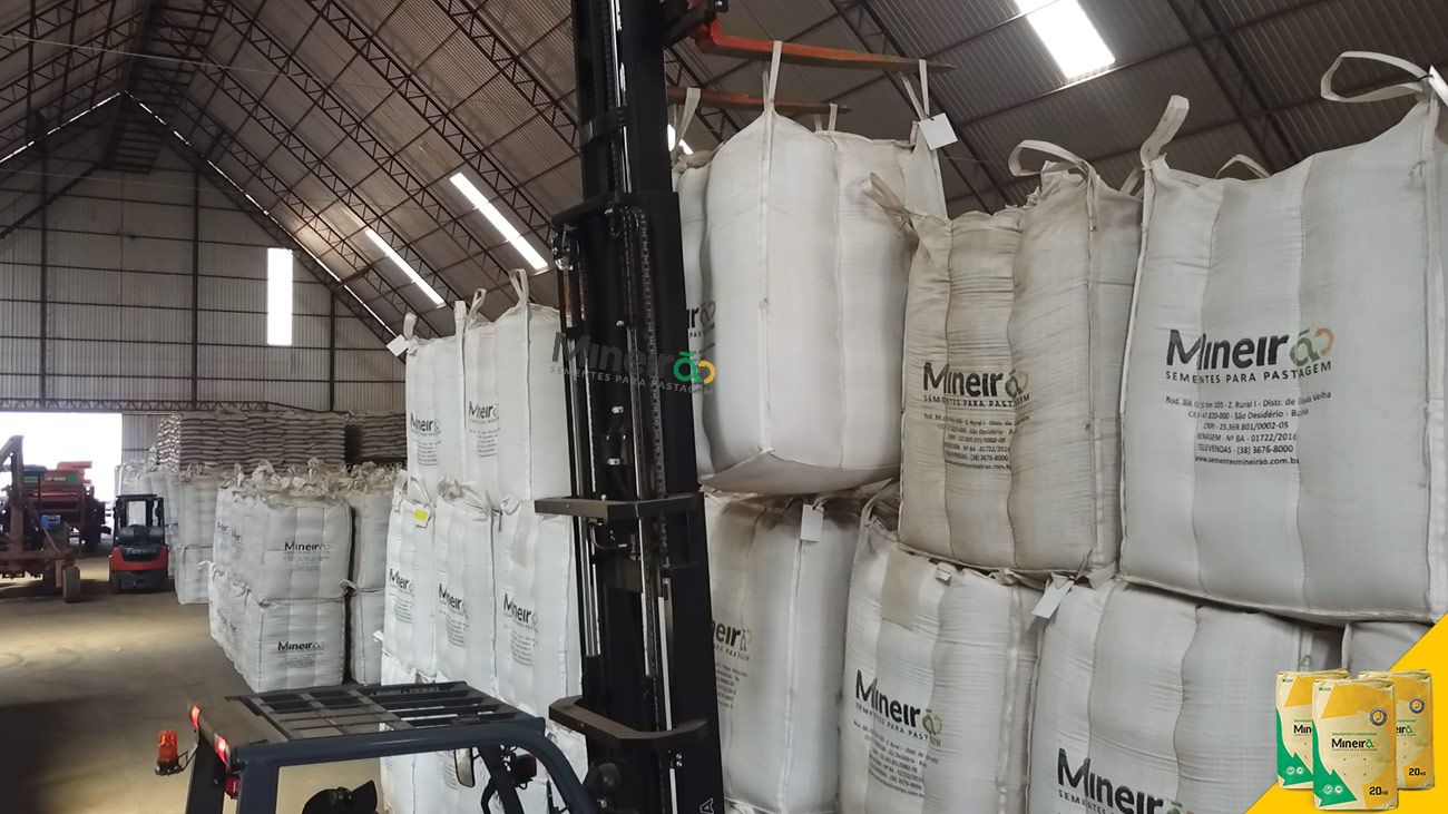 A Mineirão Sementes para Pastagem atua como produtora de sementes de forrageiras tropicais com sede na cidade de Unaí, em Minas Gerais. Nossas atividades deram início em 1995, tendo como parceiro a Embrapa Cerrados na produção de sementes de estilosantes Mineirão, originando assim o nome da empresa.