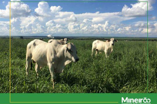 As diferenças climáticas são significantes nos biomas brasileiros, por isso é necessário observar questões como temperatura, volume de chuva e o tempo de exposição solar na região.