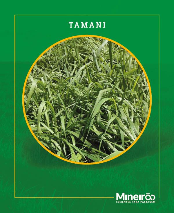 A BRS Tamani (Panicum maximum cv. Tamani) é o primeiro panicum híbrido da Embrapa. É uma forrageira de porte baixo, com grande produção de folhas que proporciona boa a cobertura de solo e vigor.
