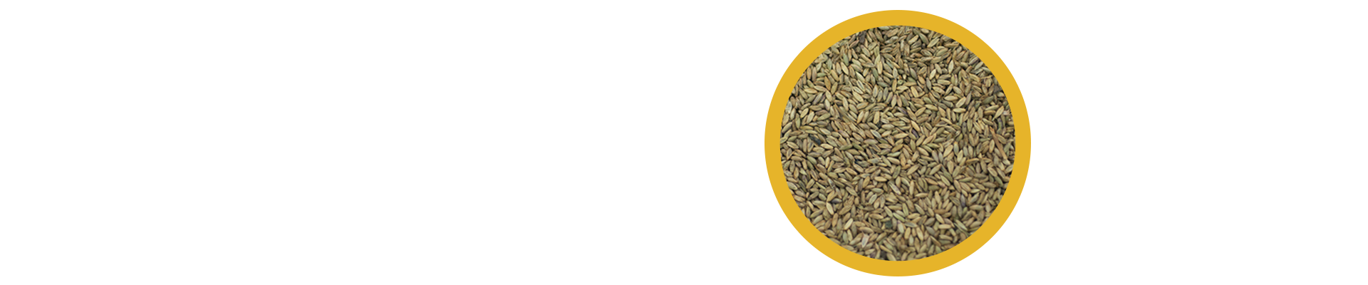 O capim Massai, gramínea forrageira da espécie Panicum maximum, apresenta um excelente desempenho no seguimento das cultivares dessa mesma espécie, tendo como principais características, a rápida adaptação à diferentes tipos de solos, como aqueles que apresentam baixos níveis de proteína.