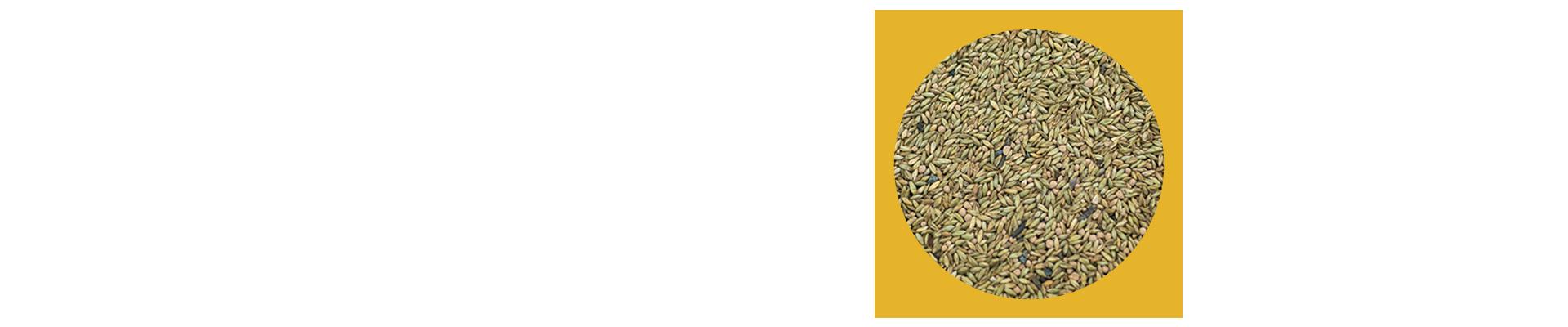 O Panicum maximum cv. Mombaça é conhecido mundialmente por sua alta produtividade e qualidade, porém, esse capim é exigente em fertilidade do solo. O manejo mais indicado para essa pastagem é o rotacionado; não é indicado para dias fixos com descanso, mas sim o pastejo e descanso de acordo com a altura da forragem.