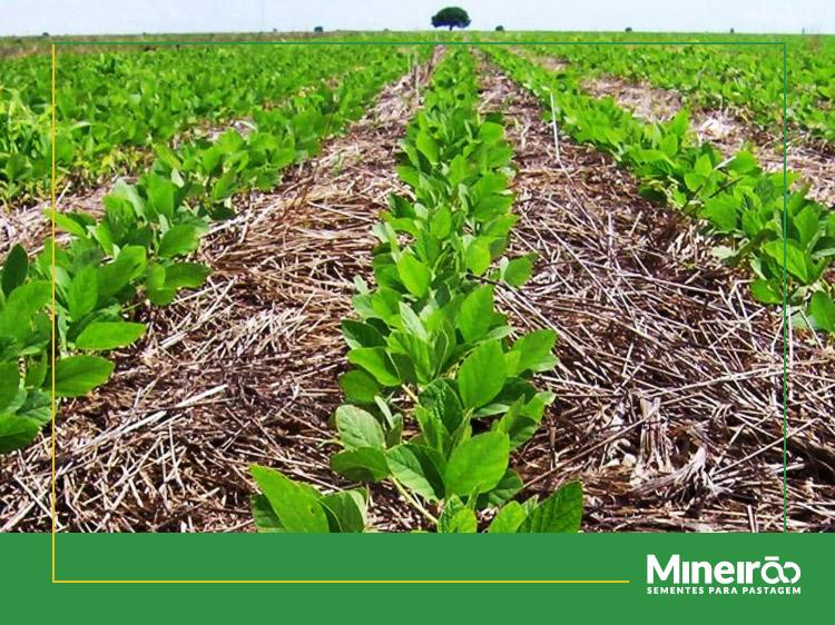 Você conhece o sistema de plantio direto (SPD)? Ele consiste em não revolver o solo, na rotação de culturas e o uso de culturas de cobertura para formação de palhada.