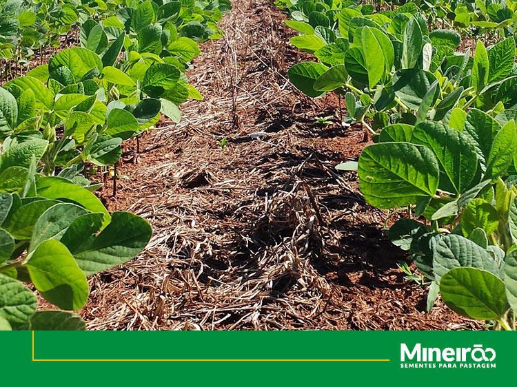 Manejo do solo e os benefícios para infiltração de água no solo